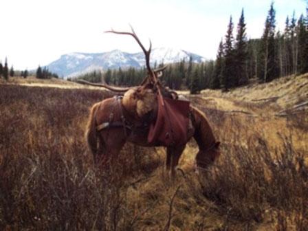 Guided Elk Hunts in Colorado
